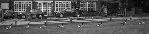 Geese in alignment