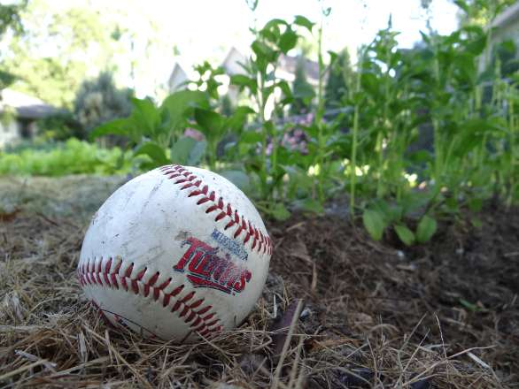 Baseball in the garden