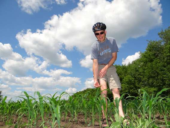 Knee high by the Fourth of July